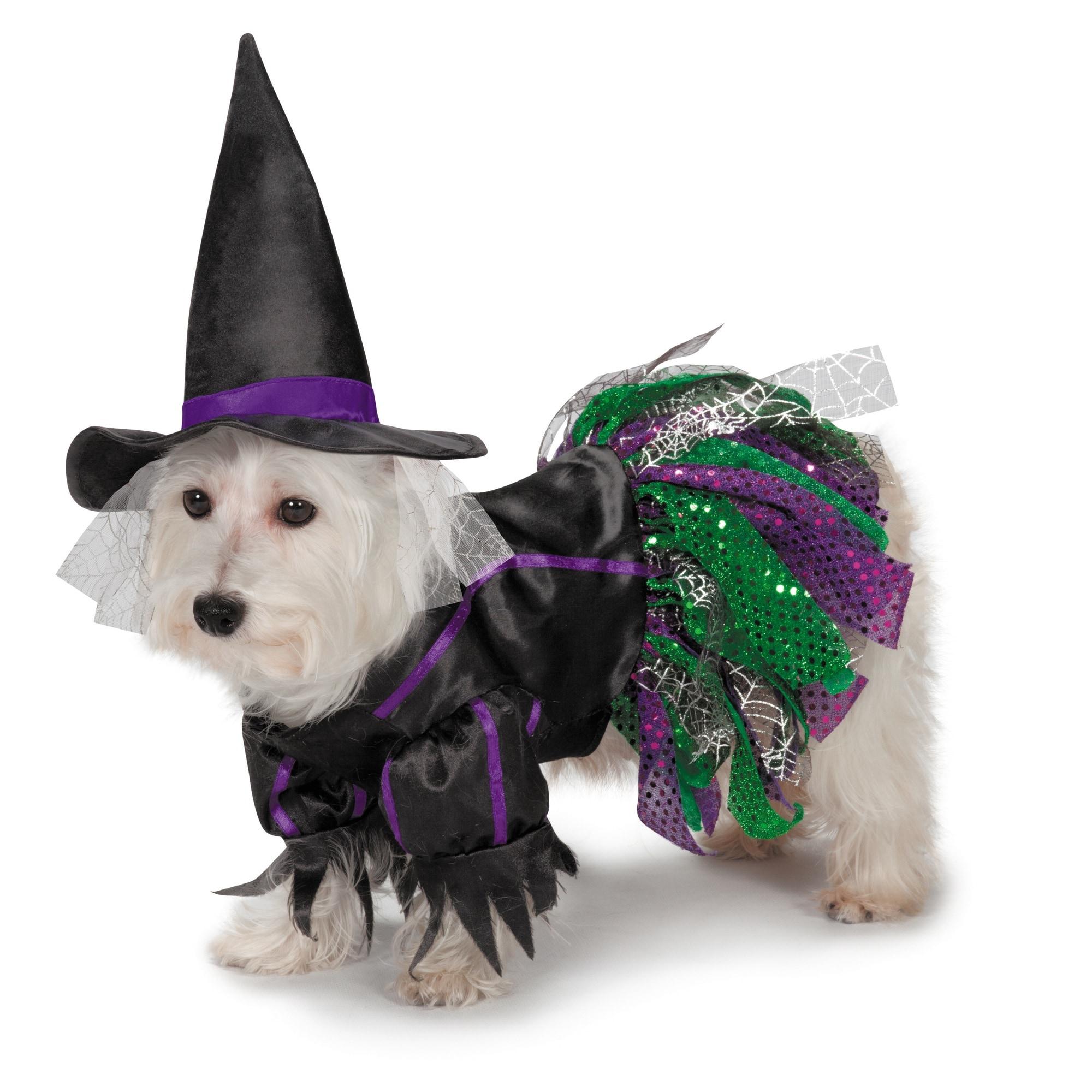 Zack & Zoey Scary Witch Dog Costume