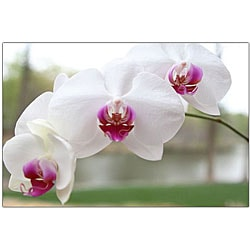 Cary Hahn 'White Orchid' Canvas Wall Art