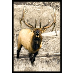 Upstream Images Bull Elk Static Wall Graphic