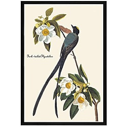 John James Audubon 'Fork Tail Fly Catcher' Framed Print Art