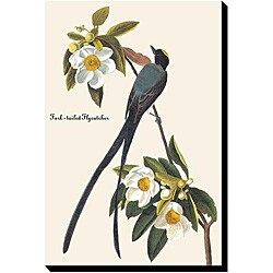 John James Audubon 'Fork Tail Fly Catcher' Canvas Art