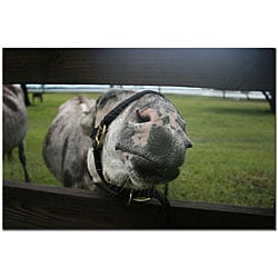 Patty Tuggle 'Give Me a Kiss Donkey' Gallery-wrapped Canvas Art