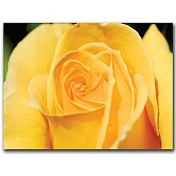 Kurt Shaffer 'Yellow Rose Close Up' Canvas Art