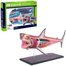 4D Vision Shark Anatomy Model