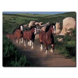 'Clydesdales Running Free' Canvas Art