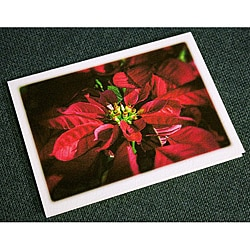 Orange Cat Art 'Poinsettia' Christmas Cards (Set of 12)
