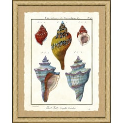 'Diderot Shell Print I' Framed Print