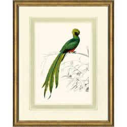'D'Oridgy Bird Print I' Framed Print