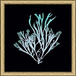 Sea Weed Print III Framed Print Art
