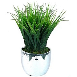 Laura Ashley Grass in Designer Silver Ceramic Container (Set of 2)