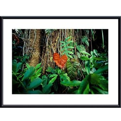 John K. Nakata 'Rain Forest' Framed Art Print 8313529