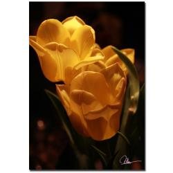 Martha Guerra 'Two Yellow Tulips' Canvas Art