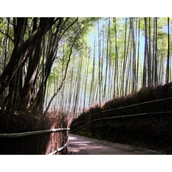 Stewart Parr 'Japan - Bambo lined walkway' Unframed Photo Print