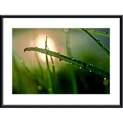 John K. Nakata 'Morning Dew' Metal Framed Art Print
