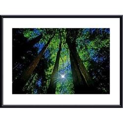 John K. Nakata 'Forest Canopy' Metal Framed Art Print 8378432