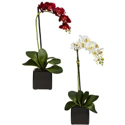 Phaleanopsis Orchid with Black Vase (Set of 2)