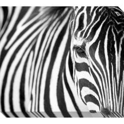 Zebra Oversized Gallery Wrapped Canvas