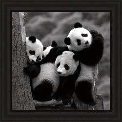 Delimont 'Pandas' Framed Print 8678886