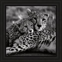 Delimont 'Cheetah With Cub' Framed Print 8678887