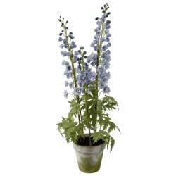 Delphinium 35-inch Tall Potted Plant