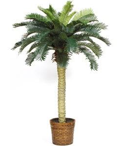 Sago Palm Silk Tree 4ft