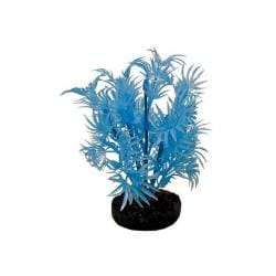 Colorburst Plant Dragon Leaf Neon Blue
