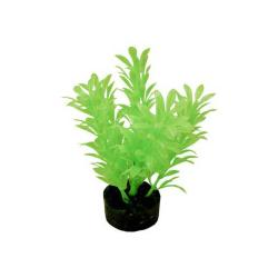 Colorburst Plant Exotic Mini Neon Green