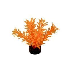 Colorburst Plant Exotic Mini Neon Orange