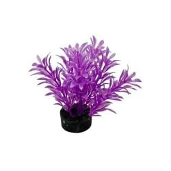 Colorburst Plant Exotic Mini Neon Purple