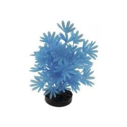 Colorburst Plant Palm Neon Blue
