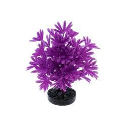 Colorburst Plant Palm Neon Purple