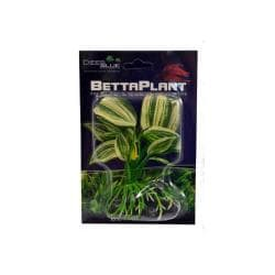 Betta Plant Small Dracaena
