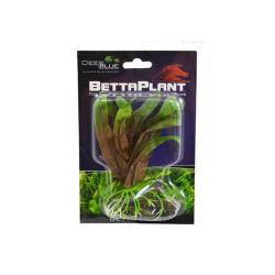 Betta Plant Small Cryptocoryne
