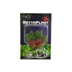 Betta Plant Small Ruby Platonia