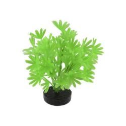 Colorburst Plant Palm Neon Green