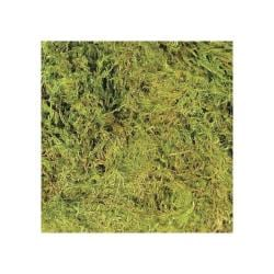 Green Terrarium Moss - Large (15 To 20gal)