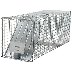 Havahart Animal Traps Single Door Raccoon Trap
