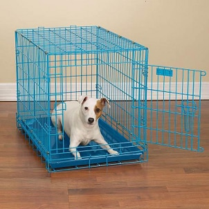 How to Introduce Your Pet to a Pet Kennel