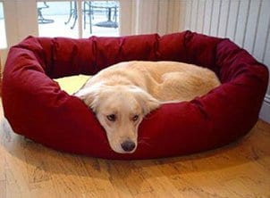 How to Increase Comfort in a Dog Bed