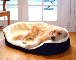 How to Clean a Large Dog Bed
