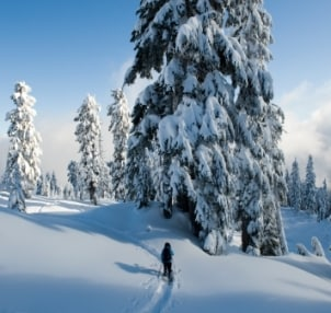 Snowshoe Buying Guide