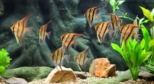 Top 5 Fish for Salt Water Aquariums