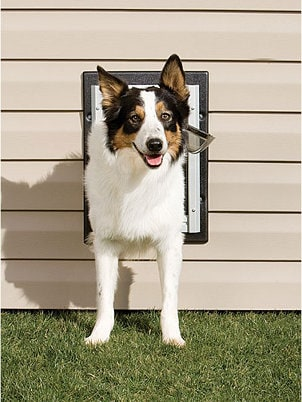 Dog Supplies Buying Guide