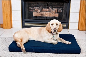 Best Places in Your Home for a Dog Bed