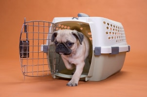 How to Clean a Pet Carrier