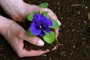 Gardening Tips - April Showers Bring May Flower