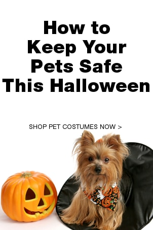 How to Keep Your Pets Safe this Halloween
