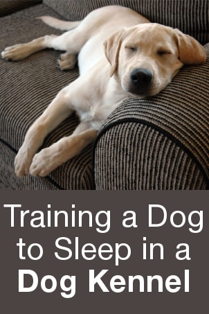 Training a Dog to Sleep in a Dog Kennel