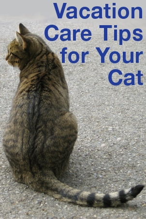 Vacation Care Tips for Your Cat