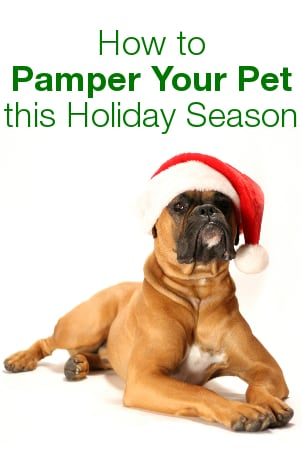 How to Pamper Your Pet this Holiday Season